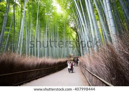 KYOTO JAPAN - NOV 6, 2015: Unidentified people visit bamboo forest in Arashiyama. Arashiyama is a nationally-designated Historic Site and Place of Scenic Beauty. - stock photo