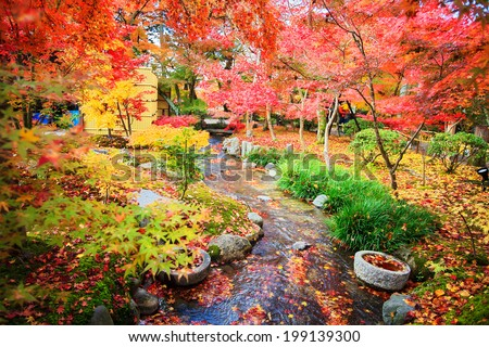 Kyoto, Japan - November 26, 2013: Autumn Japanese garden with maple - stock photo
