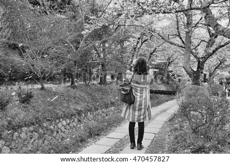 Kyoto, Japan - Philosopher's Walk, a hiking path famous for its cherry blossom (sakura). Woman takes photo of cherry petal rain. Black and white vintage style.