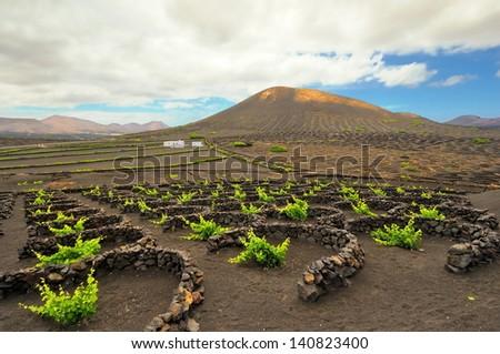 La Geria - vineyard region of Lanzarote - stock photo