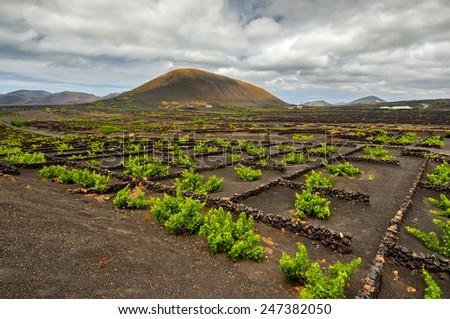 La Geria - vineyard region of Lanzarote, Canary Island, Spain - stock photo