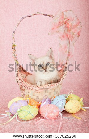 La Perm kitten sitting inside Easter basket with ribbons and bows, with Easter eggs on pink background  - stock photo