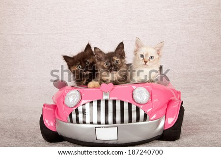 La Perm kittens sitting inside pink toy car on silver background  - stock photo