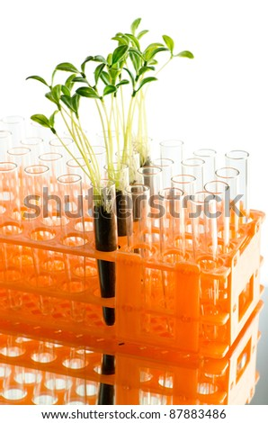 Lab experiment with green leaves - stock photo