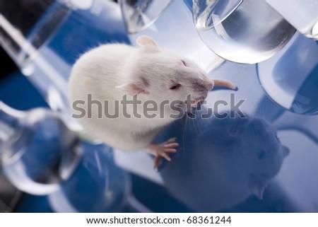 Laboratory rat - stock photo