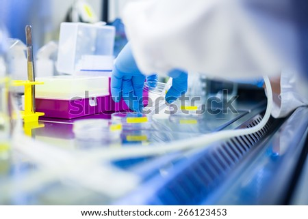 Laboratory work with cells and tissue cultures in lab