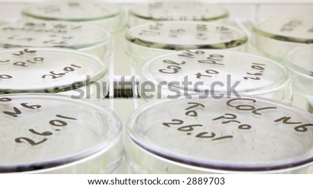 laboratory workplace for creating modern transgenic plants - stock photo