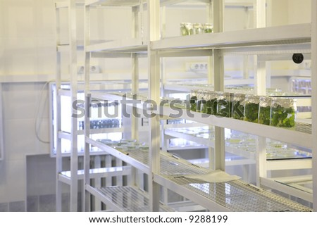 laboratory workplace for creating modern transgenic plants