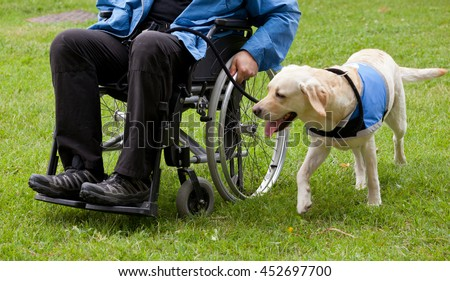 Labrador guide dog and his disabled owner on green grass. - stock photo