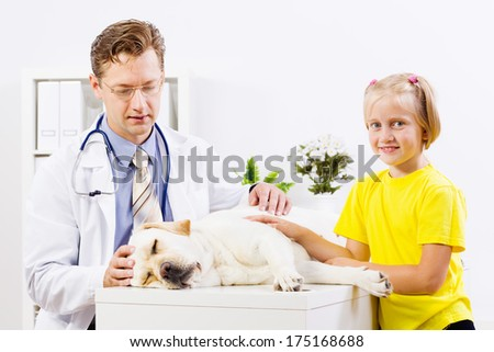 Labrador lying on table checked up by veterinarian - stock photo