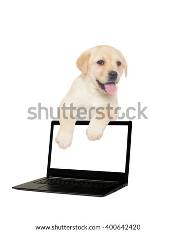 labrador puppy and a laptop on a white background isolated