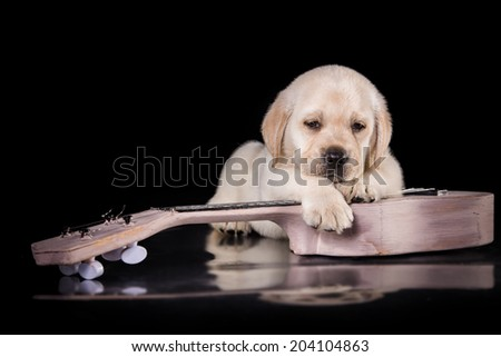 labrador puppy on a colored background