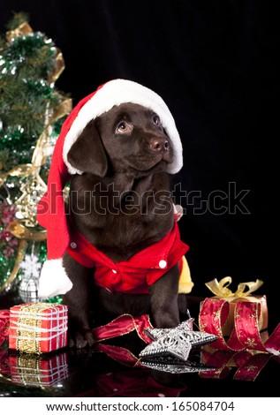 labrador retriever and christmas present - stock photo