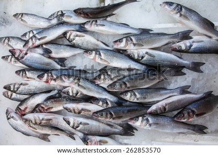 Labrax or seabass on a fish market lying on ice - stock photo