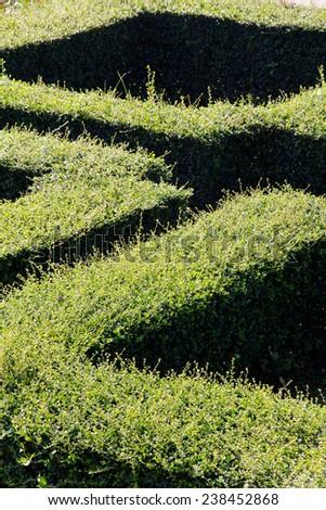 labyrinth maze of tall bushes. - stock photo