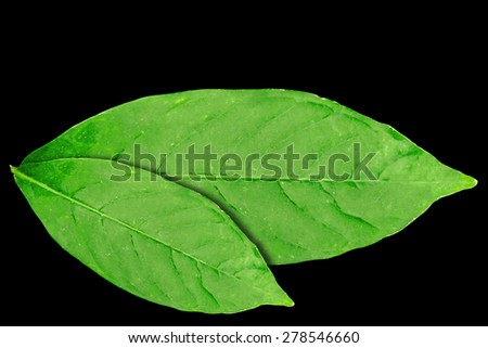 lacerated dry Green leaf.