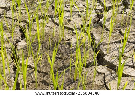 Lack of water fields - stock photo