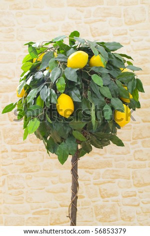 Laden lemon tree in front of stone background
