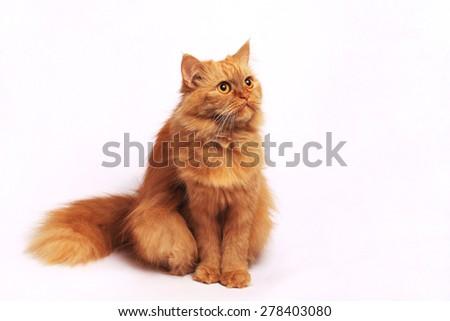 lady-cat - stock photo