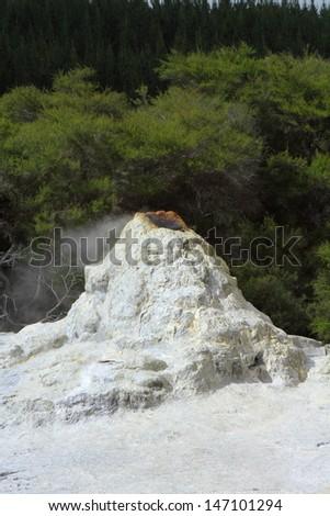 Lady Knox Geysert erupting in Rotorua, New Zealand - stock photo