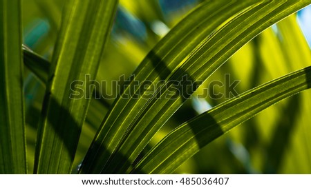 Lady palm leaf close up shot