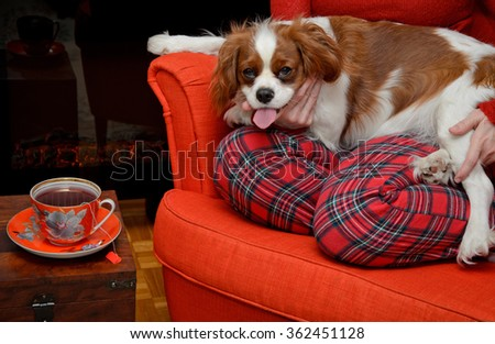 Lady relaxing with her dog (Cavalier King Charles spaniel) and drinking tea by the fireplace - stock photo