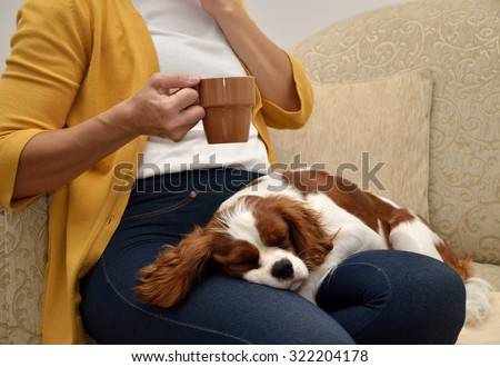 Lady sitting on sofa drinking coffee and a lovely dog (Cavalier King Charles Spaniel, Blenheim) sleeping on her lap - stock photo