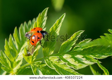 ladybird is ready for takeoff  - stock photo