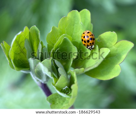 Ladybird on a plant leaf
