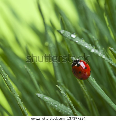 Ladybird on grass - stock photo