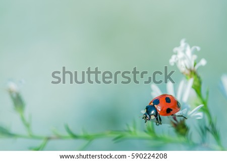 Ladybird on the white flower