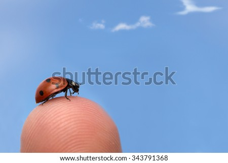 Ladybug, Coccinella septempunctata on finger, blue sky in the background - stock photo