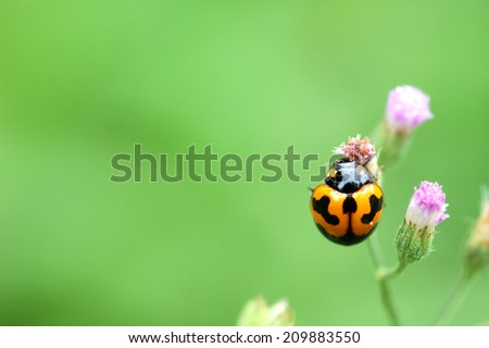 ladybug on a green leaf macro - stock photo