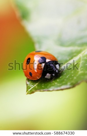 Ladybug on a Leaf edge