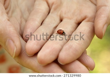 ladybug on female hands
