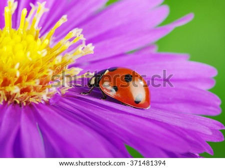 Ladybug on flower and the green background - stock photo