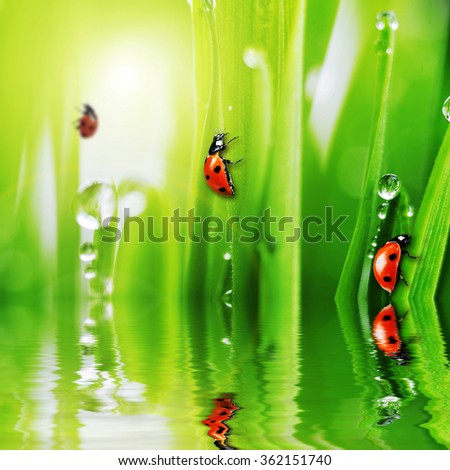 ladybug on fresh green grass reflecting in water - stock photo
