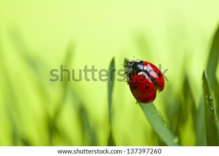 Ladybug on leaf - stock photo