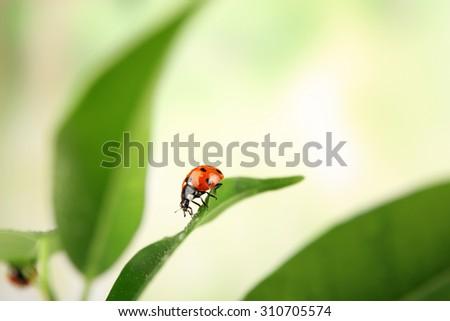 Ladybug on leaf on blurred background - stock photo