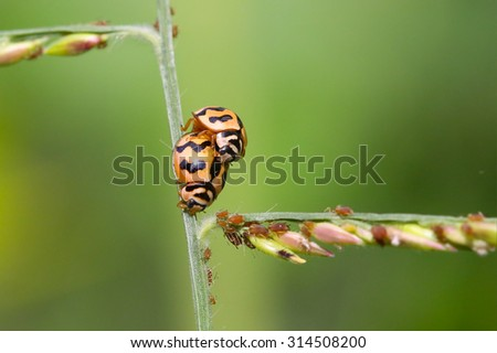 ladybug on nature tree grass (Select focus) - stock photo