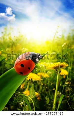 Ladybug on spring green field