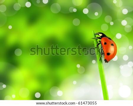 Ladybug on stalk with blur background - stock photo