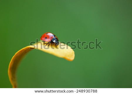 Ladybug on yellow leaf and green background - stock photo