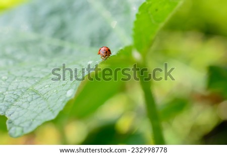 Ladybug running along on blade of green grass. Beautiful nature - stock photo