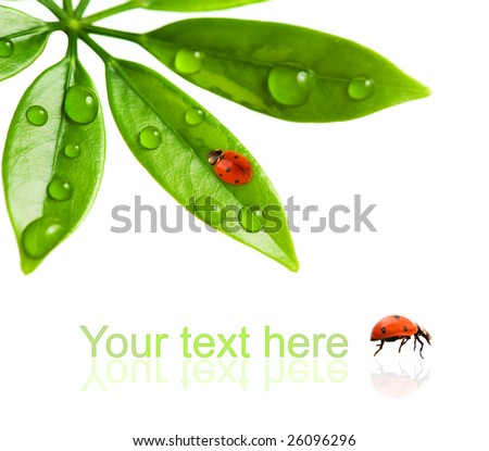 Ladybug sitting on a fresh green leaf. - stock photo