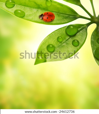 Ladybug sitting on a green leaf. - stock photo