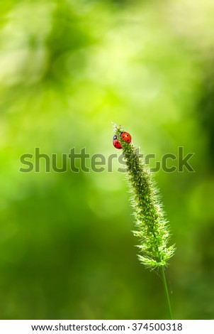 Ladybugs on grass over green blurry summer background - stock photo