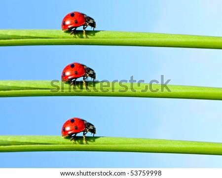 Ladybugs on green grass - stock photo