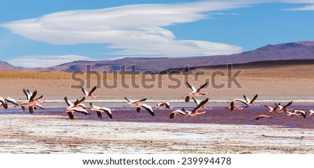 Lagoon Desert panorama, Altiplano, Bolivia - stock photo