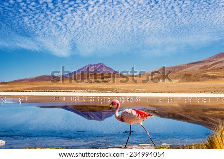 "Laguna at the ""Ruta de las Joyas altoandinas"" in Bolivia with pink flamingo walking through the scene - stock photo"
